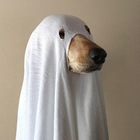 Ghostdog1521