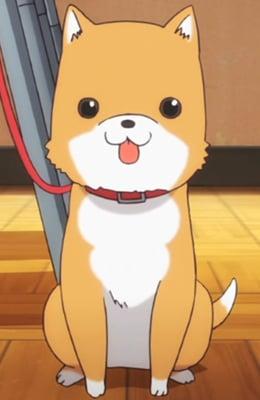 8 Pets. Taromaru-gakkou-gurashi-64522