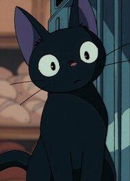 anime black cat red scarf