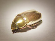 GoldenBug's avatar