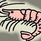 shrimps's avatar